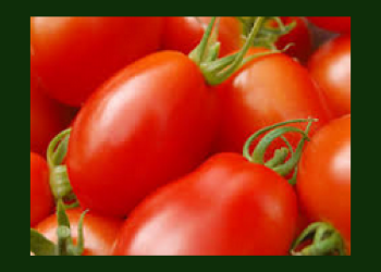 Roma Tomatoes as Low as $0.52 For a Pound – Additional Pounds $0.77
