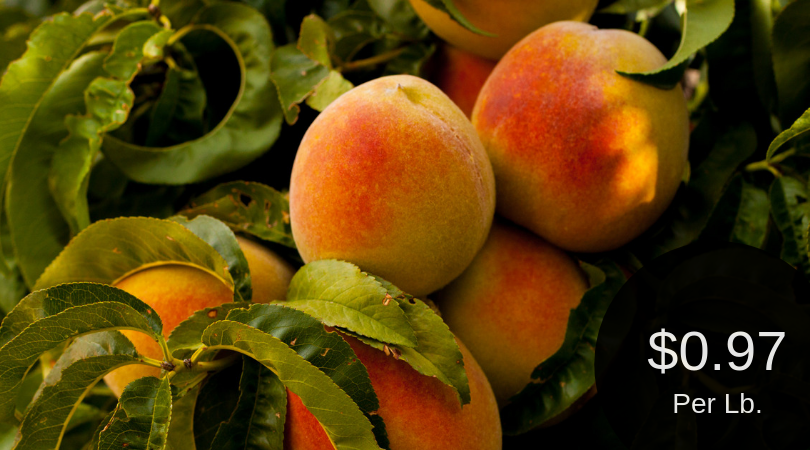 Peaches For $0.97 Per Pound at Safeway – Palisade or California Grown