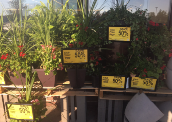 Plants for Up To 50% Off at Safeway