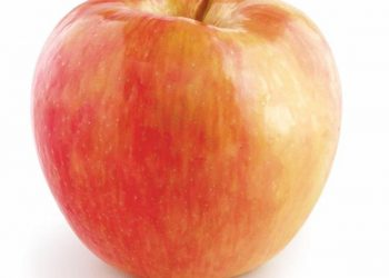 Honeycrisp Apples for $1.77 Per Pound