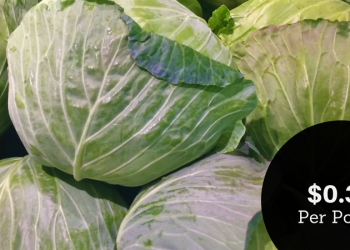 Cabbage $0.33 a Pound – Perfect for Corned Beef & Cabbage on St. Patrick's Day