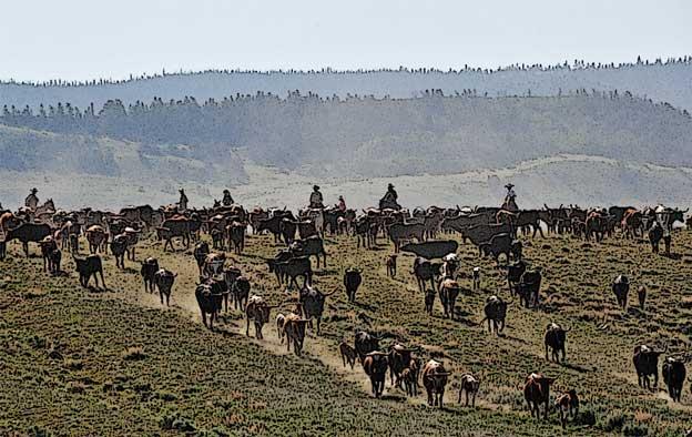1618-criollo-cattle